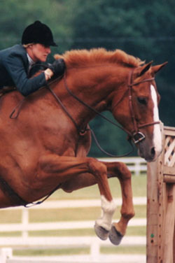 English, Hunt Seat Riding Lessons